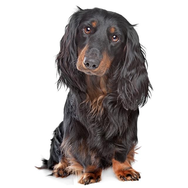 MMOK-Kutyák ortopédiai megbetegedései - Integral Dog