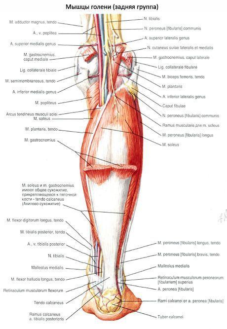 a vállfájdalom nem tudja felemelni a kezét ízületi mobilitás gyógyszerei