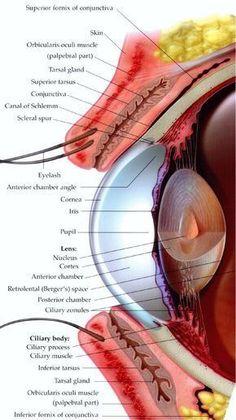 ízületi fájdalom és neuritis)