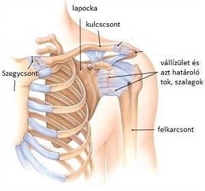 Rotátor köpeny szindróma kezelése gyógytornával