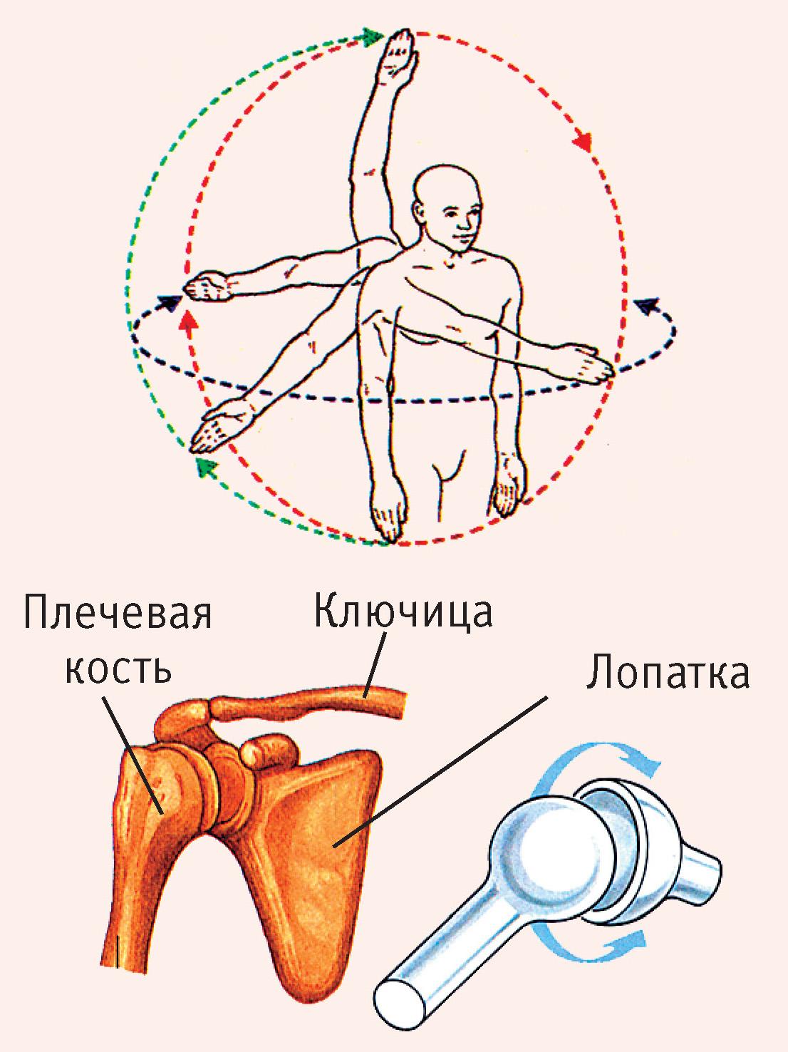 A csontritkulás fókusza a gömb fején. Szubchondrális osteosclerosis. Térd- és könyökízületek