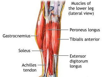 fájdalom a bokaízület felett
