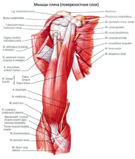 a bokaízület pronációs károsodása az ujjak ízületeinek fájdalmának diagnosztizálása