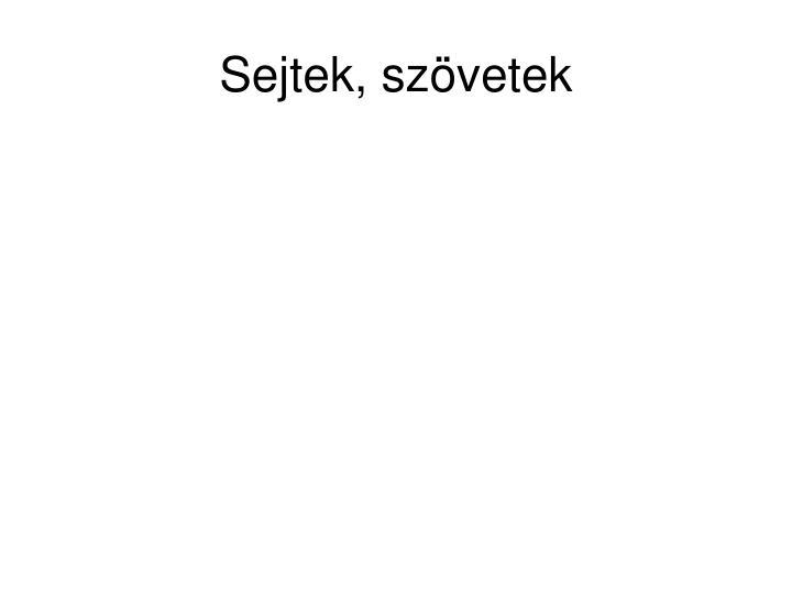 porc kötőszövet sejtek)