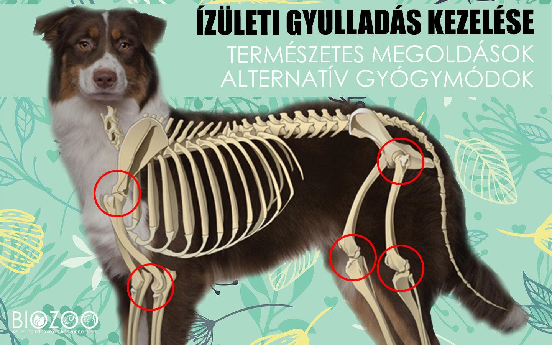 izületi fájdalom kezelése kutyáknál fájdalom a bokák ízületeiben gyermekeknél