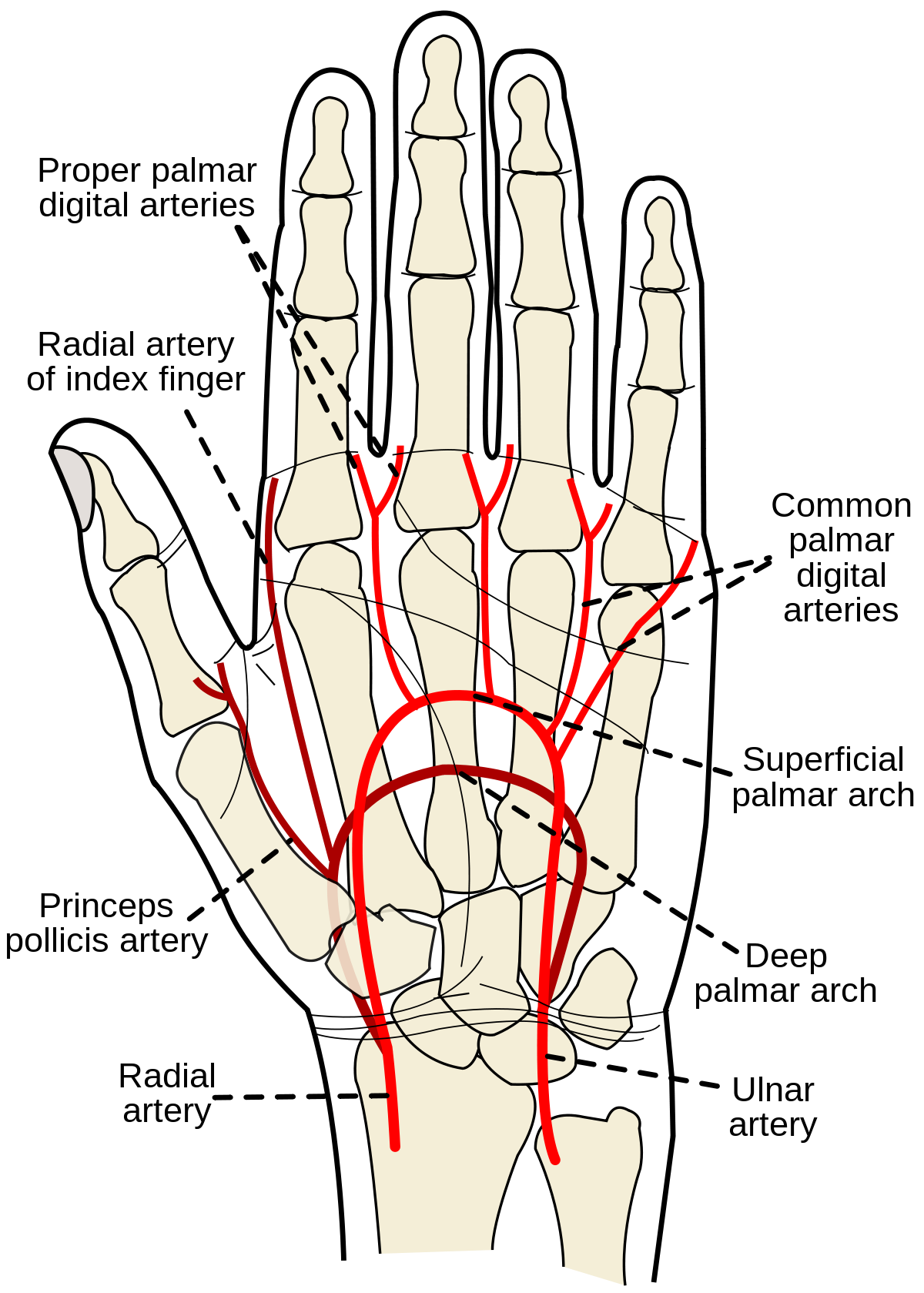 Dr. Diag - Biceps tendinitis