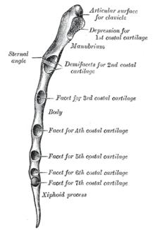 szegycsont clavicularis ízületi gyulladás