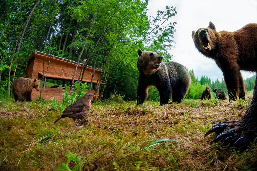 közös kenőcs medve)