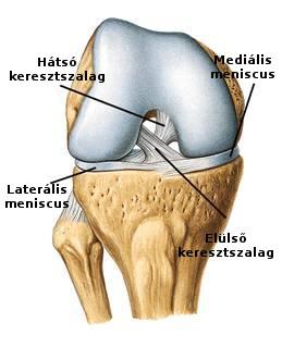 térd sérülés ligamentum károsodás