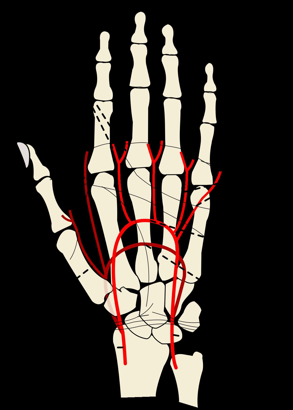 brachialis artrózis kezelési fórum