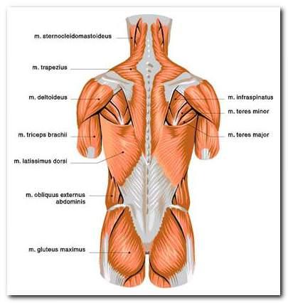 izom-csontrendszer és kötőszövet betegségei térdízület osteoarthritis kezelése és a betegség mértéke