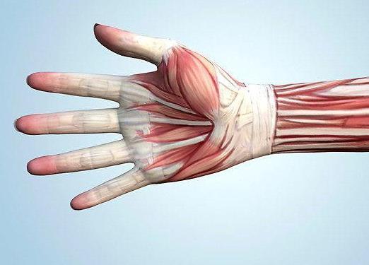 lábfájdalom a hüvelykujj ízületében