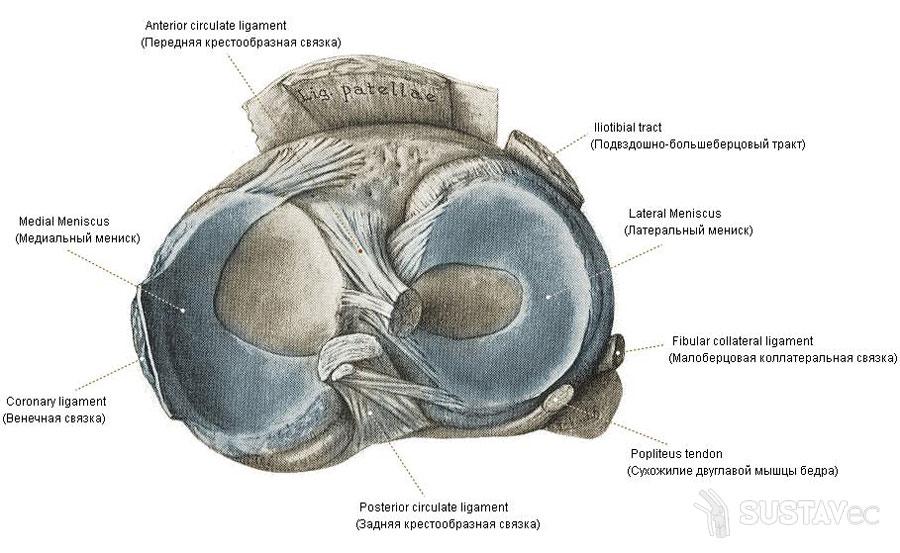 a combcsontok ízületének osteochondroze
