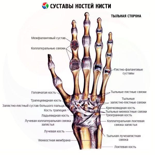 metacarpalis ízület)