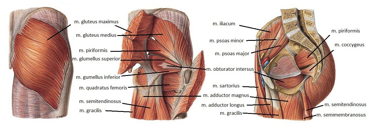 csípőízület a csípőízület kezelésében