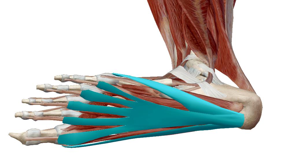 fiatalkori lumbosakrális gerinc kezelés artrózisa milyen kenőcs az ágyéki csontritkulásról