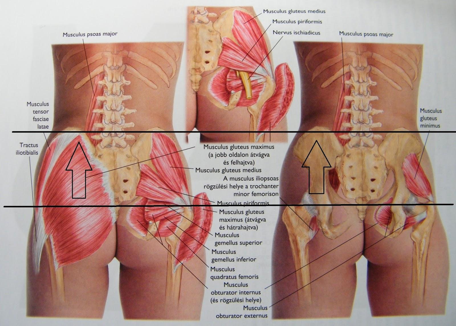 fájdalom a bal csípőben és a hát alsó részén