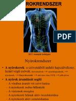 Bokaficam 4 oka, 7 tünete és 5 kezelési módja [teljes leírás]