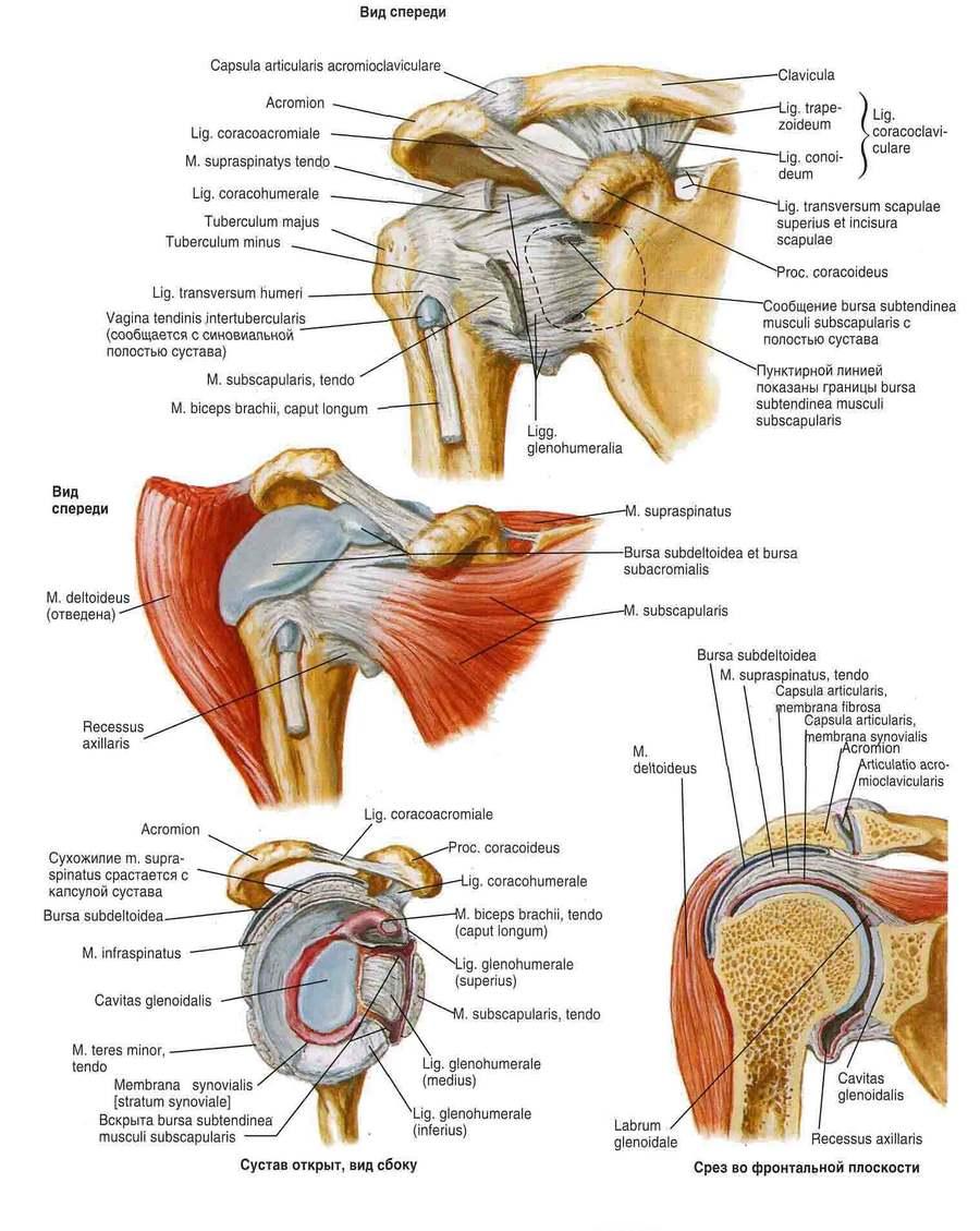 a könyökízület szubchondrális szklerózisa)