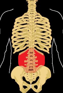 amikor az ízületek és a gerinc fáj fájdalom a bal csípőízületben, mint hogy kezeljék