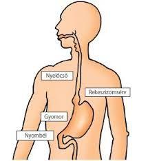 vagus ízületi betegség