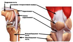 Áttekintés a boka kötés szakadásáról: a lényeg, a patológia típusai, a kezelés