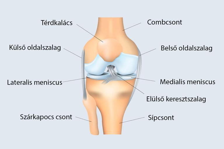 fájdalom a térdízület belső felületén