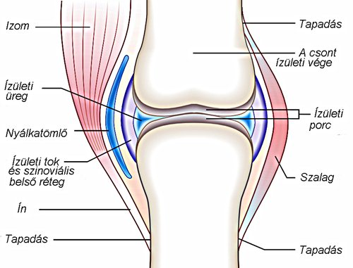 a térdízületek és a szalagok enyhítik a fájdalmat