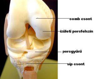 térd artroszkópos kezelése)