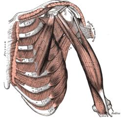 fáj a gerinc ízületeinek izmai