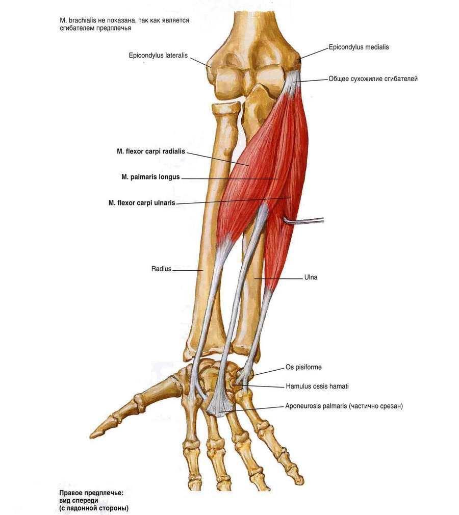 a lábujjak és a lábak ízületei fájnak