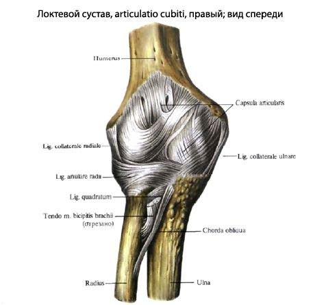 térdfájdalom következményei sertés-artrózis kezelés