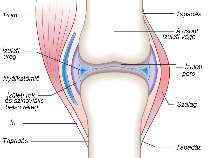 fájdalom a térdízület ízületi gyulladásával és fájdalom a térd mögött