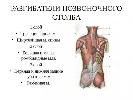 fájdalom a vállízületben a fej elfordításakor)