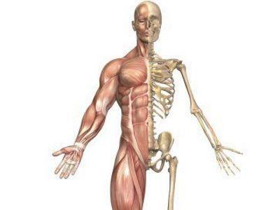 izom-csontrendszer és kötőszövet betegségei közös tabletták nevei