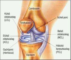 térd sport sérülései csontritkulás hogyan kezelhető kenőcs