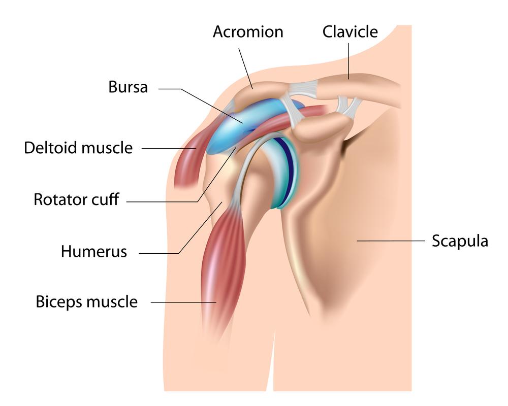 a vállízület ízületi kapszulájának kezelése