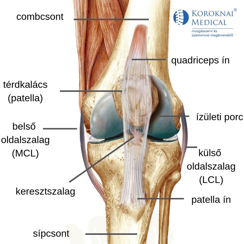 térdízületi kezelés fizioterápia)