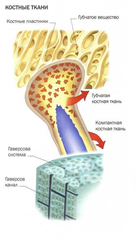 tarsus - metatarsális ízületek fájdalma)