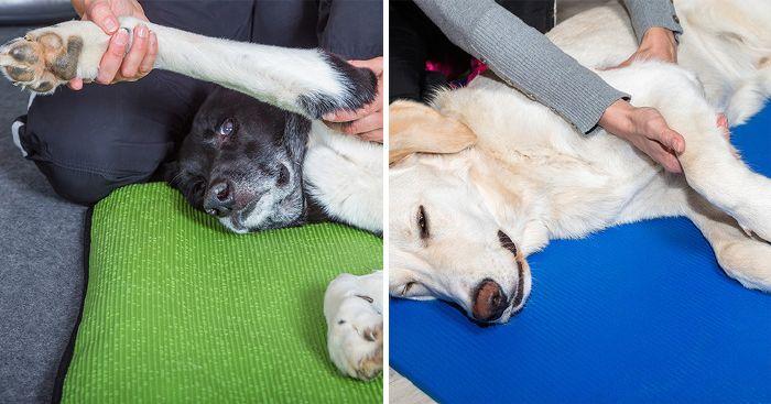 a kutyának ízületi fájdalma van csukló-repedések kezelése