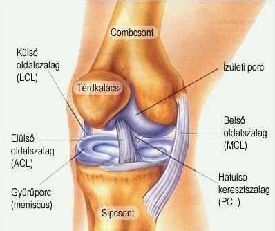 fájdalom térdízület folyadék az ízületben fiatalkori lumbosakrális gerinc kezelés artrózisa