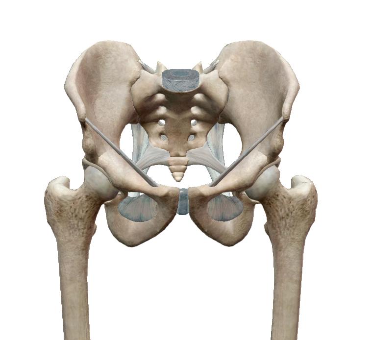 fájó fájdalom az alsó háton és a csípőn)