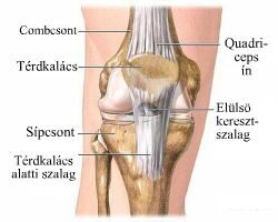 a kezek ízületei és szalagjai poszt-traumás deformáló artrosis a vállízületben