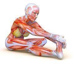 sor gyakorlatok az ízületi fájdalom)